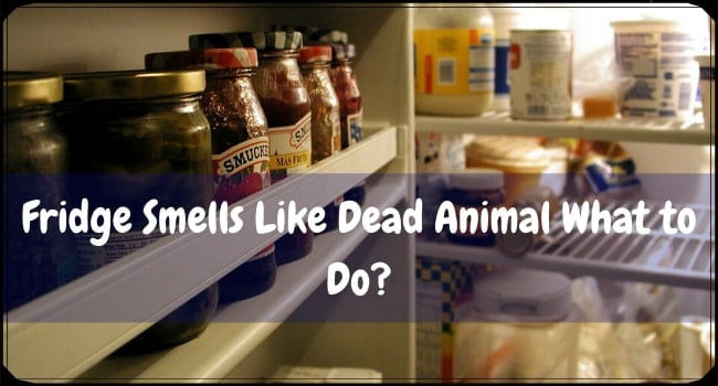 My Fridge Smells Like Dead Animal